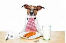 Can dogs drink milk?