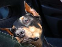 How to treat dog's car anxiety?